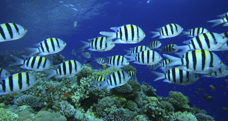 Ein Musterbeispiel an Effizienz: Fische im Schwarm!